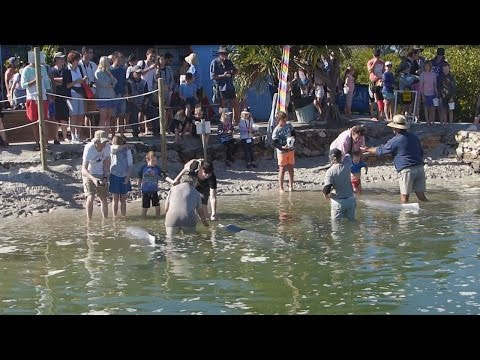 Dolphin Feeding Tin Can Bay