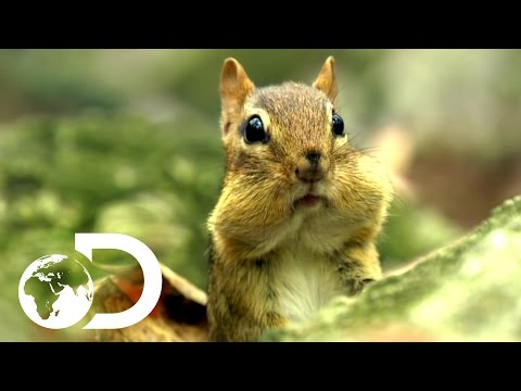 Cutest Animals | North America