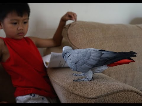 Parrots & Territorial Aggression