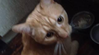 Бандитский кот: овсянка