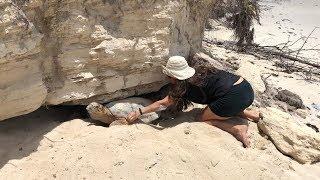 Operation Jairo Caribbean: Turtle Rescue