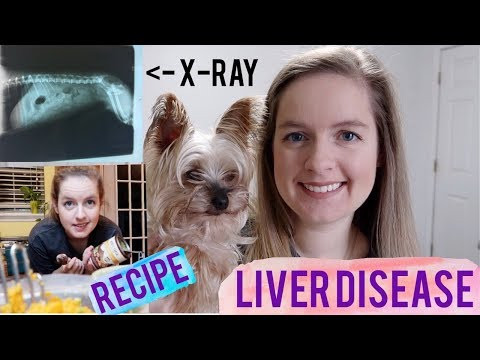 Liver Disease Problems In Dogs Treatment & Homemade Recipe