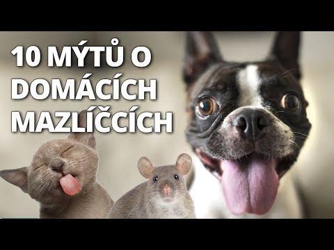 😳 DIVNÉ RANDE! HODÍ SE VŮBEC K SOBĚ? 🤢 (The Sims 4 Hurá na vysokou #12 🎓) from YouTube · Duration:  25 minutes 47 seconds