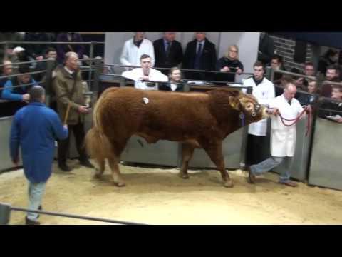 Swalesmoor Liam Lim Bull 30,000gns