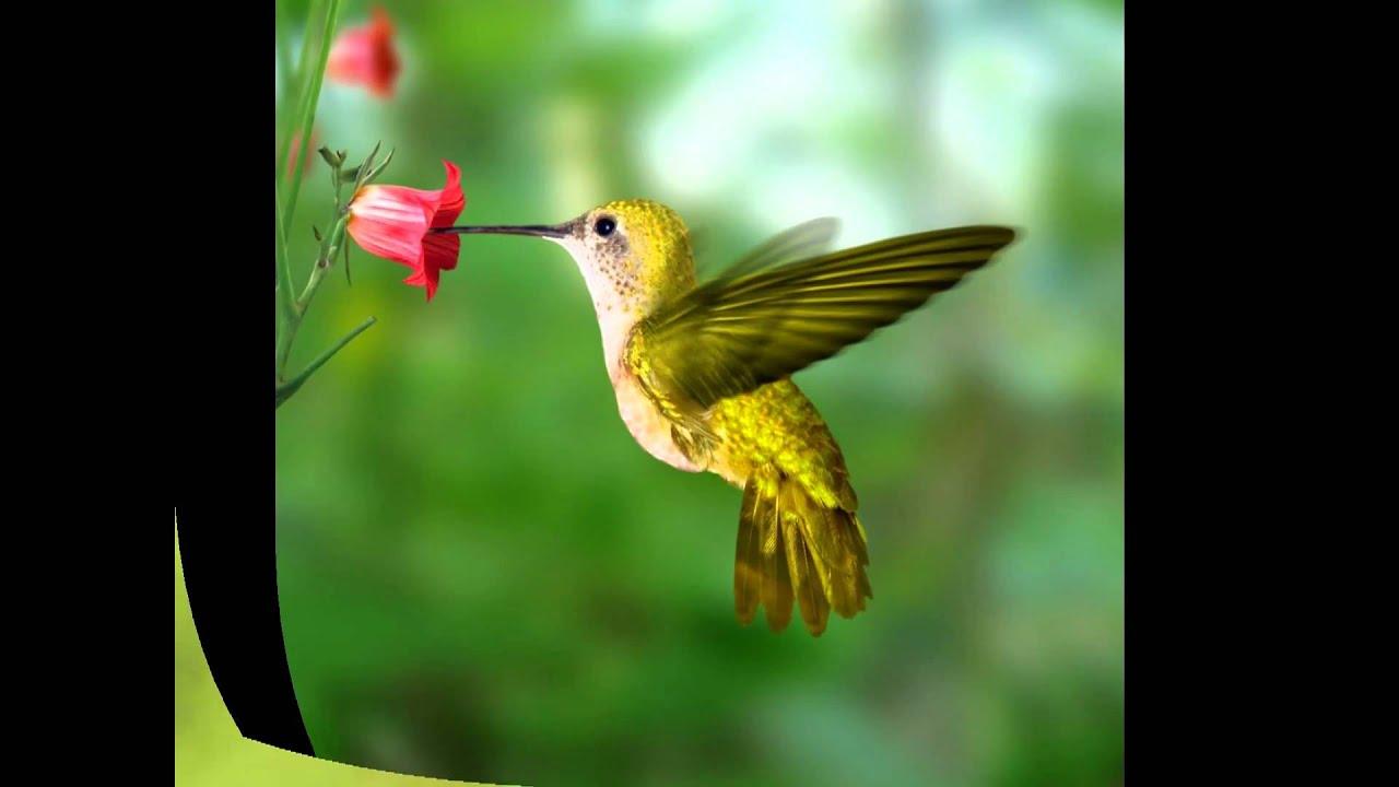 Colibrí La Belleza Convertida En Pájaro Youtube