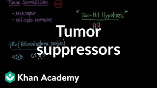 Tumor suppressors | Biomolecules | MCAT | Khan Academy