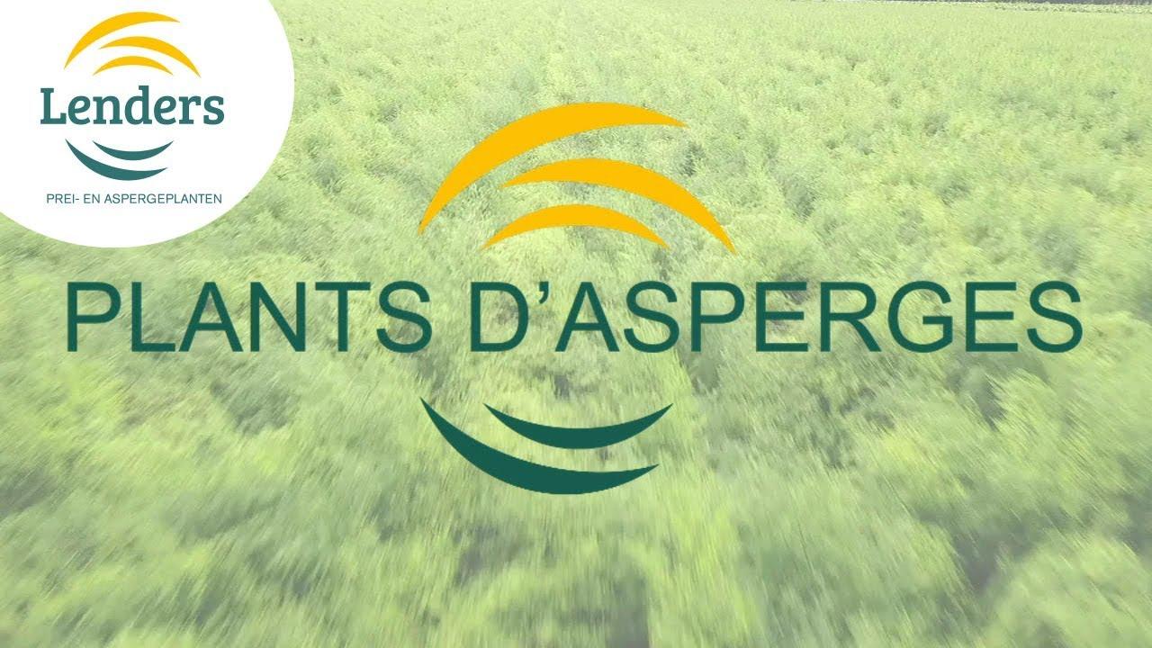 Lenders BV - Kessel 4 PLANTS D\'ASPERGES [FRANCAIS] 2017 - YouTube