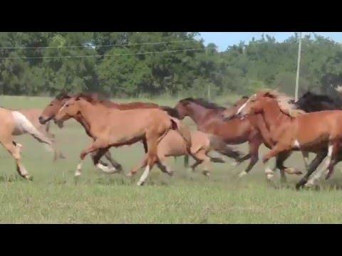 250 caballos en libertad - Uruguay