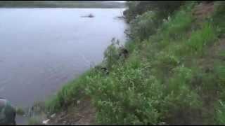 Рыбалка на реке Ветлуга