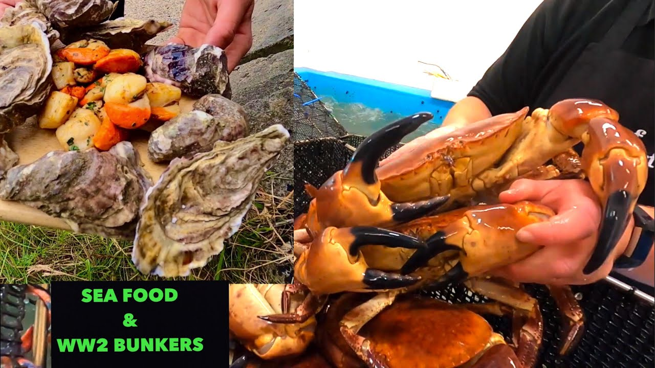 SEAFOOD COOK - Oysters & Scallops , Exploring WW2 Bunkers / VLOG