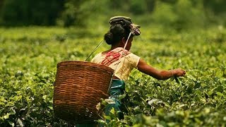 Amazing Things To Do In Assam For The Traveler in You HD 2015