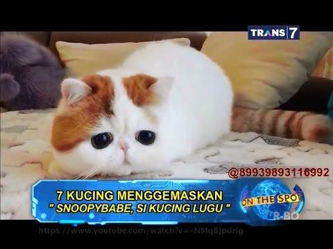 On The Spot - 7 Kucing Menggemaskan