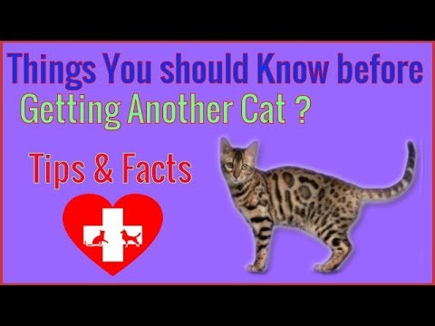What You Should Know Before Getting Another Cat? 💗