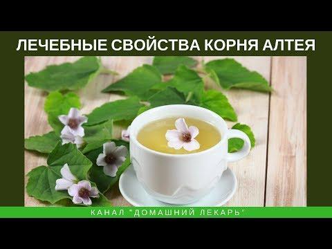 Лечебные свойства корня алтея - Домашний лекарь - выпуск №123