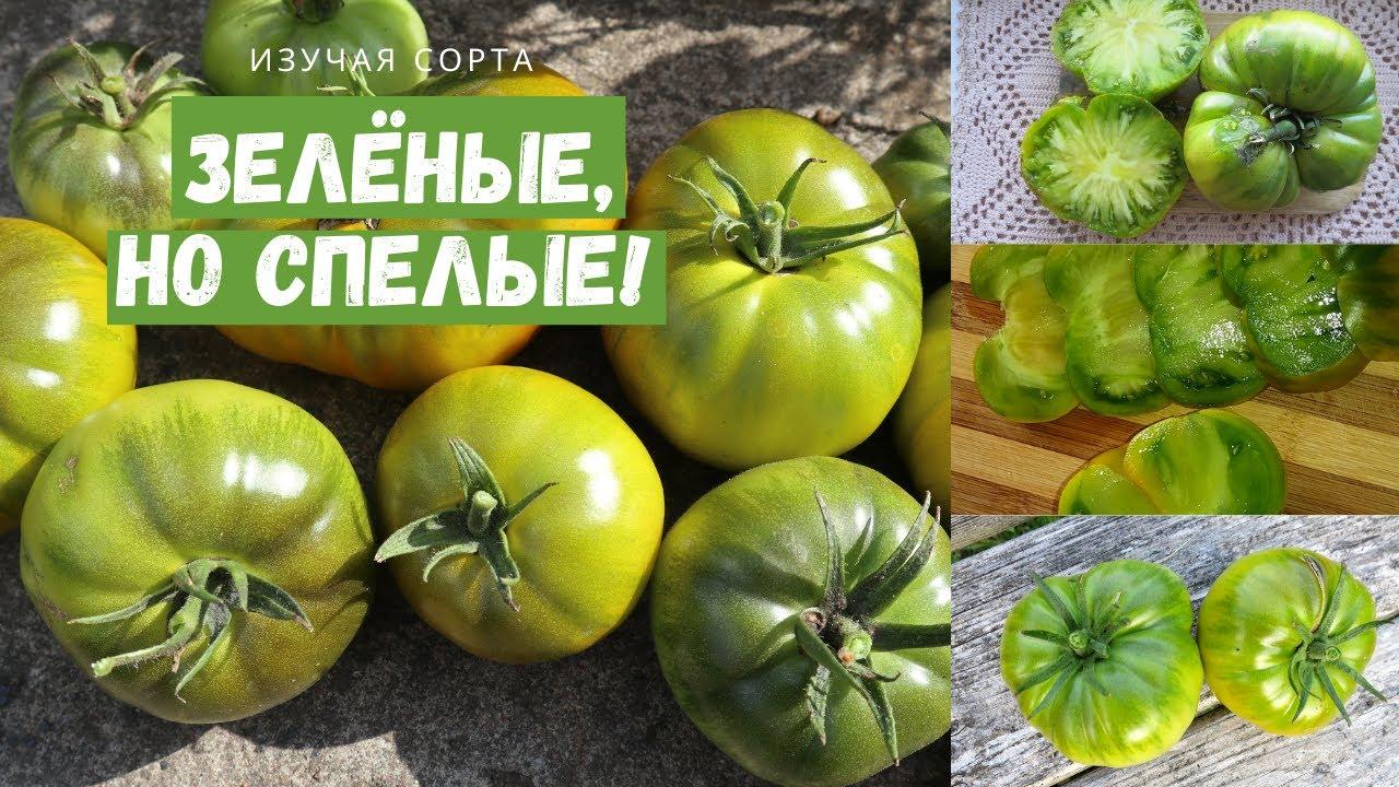 16 сортов зеленоплодных томатов с описанием, фото и видео