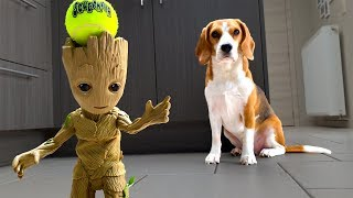 Dogs Playing with Baby Groot  : Funny Dogs Louie and Marie