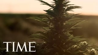 Inside The World Of Pot For Kids | TIME