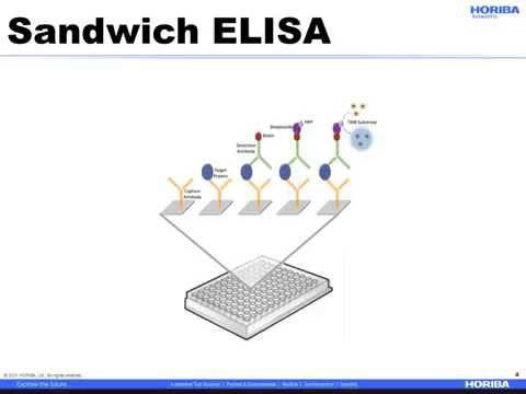 Comparison of SPRi and ELISA in the Evaluation of Biomolecules in Crude Samples