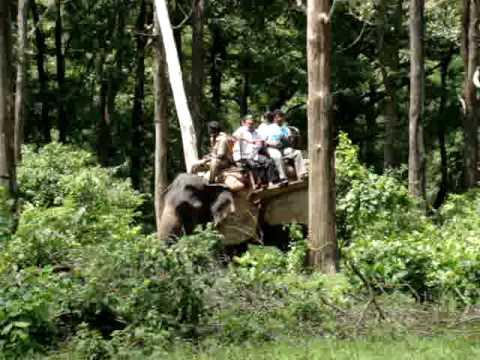 elephant ride ANAMALAI