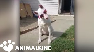 Dog must wear special goggles to go outside | Animalkind