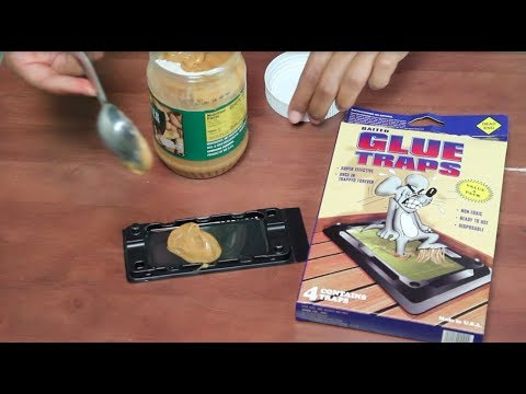 How To Bait A Mouse Trap With Peanut Butter