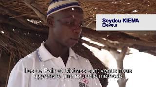 Les aliments améliorés pour les animaux au Burkina Faso