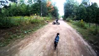Entraînement Alaskan 4 Roues Et Bike-joring - Sled Dogs Fall Training