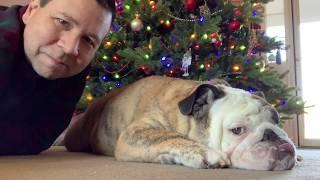 reuben-the-bulldog-mr-pampers