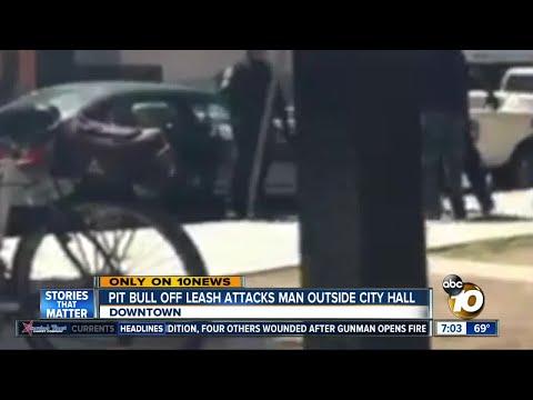 Unleashed pitbull attacks man outside city hall