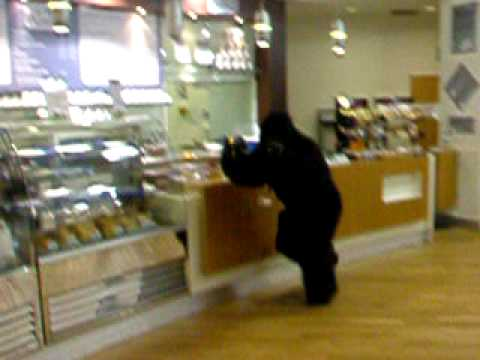 Gorilla escapes from Blackpool Zoo!!