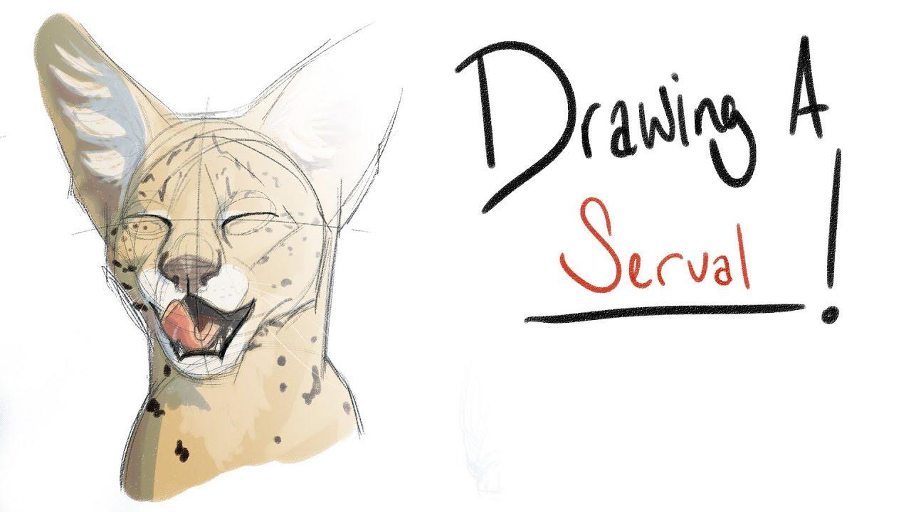 U0026 39 Drawing A       U0026 39  Ep 3  Servals