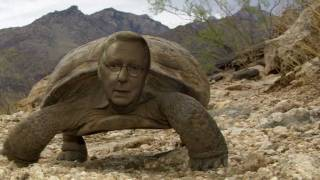 From youtube.com: Mitch McTurtle {MID-146540}