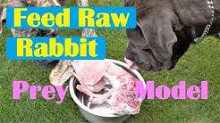 Feed Raw Rabbit Prey Model Raw (PMR) Diet