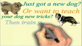 Online Dog Or Puppy Training For Your Cavalier King Charles Spaniel