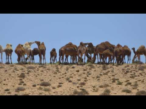 TanTan: La puerta de entrada al Sahara Occidental