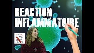 Immunité innée - Réaction inflammatoire #TerminaleS #1èrespéSVT #BACSVT