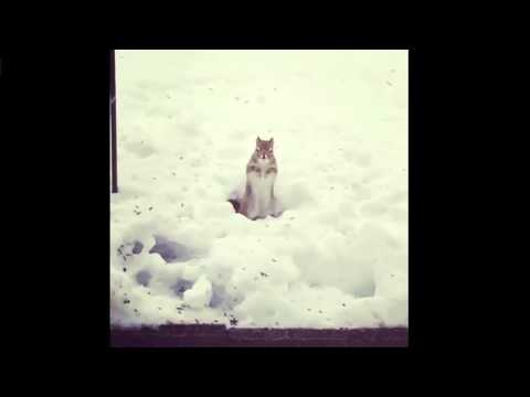 Dancing squirrel in the snow