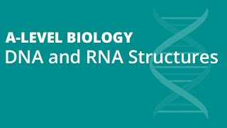 Structures of DNA & RNA | A-level Biology | OCR, AQA, Edexcel