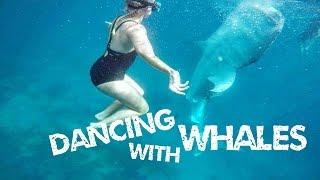 My family crashed my Honeymoon! Swim with the Whale Sharks in Cebu!