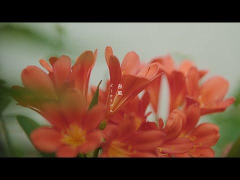 """ズーカラデル """"春風"""" (Official Music Video)"""