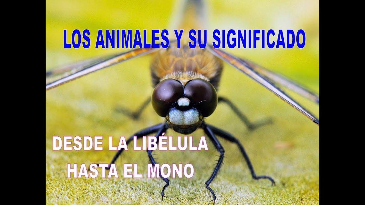 Animal De Poder Los Animales Y Su Significado Desde La Libélula