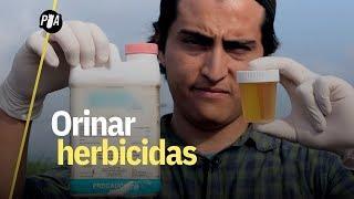 Niños orinan herbicida glifosato en Autlán, Jalisco