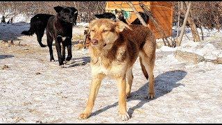 Приют для бездомных животных в Оренбурге (Собаки)