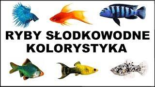 Jakie są najbardziej kolorowe słodkowodne rybki akwariowe?