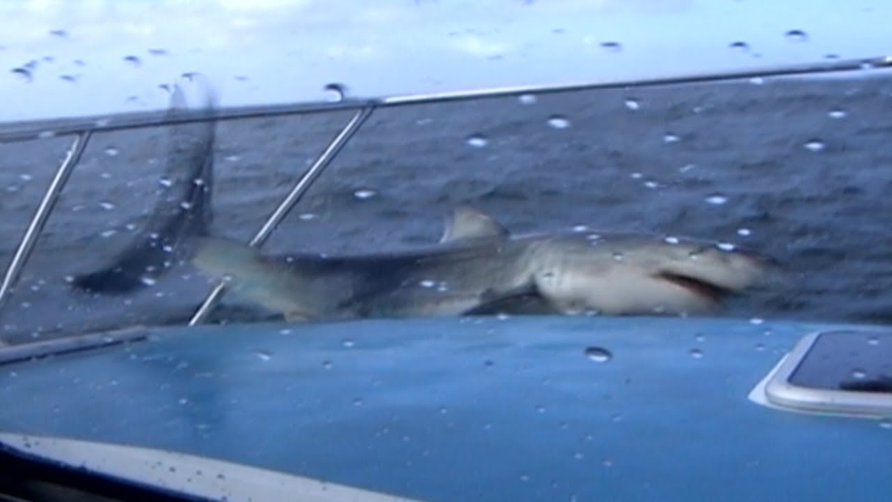 The killing games :  les requins commencent à chasser hors de l'eau !
