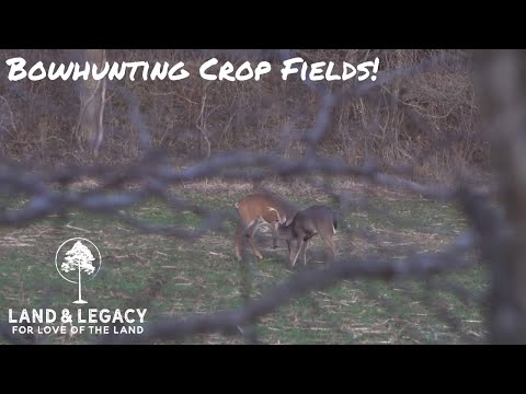 December Deer Hunting! Bowhunting Crop Fields