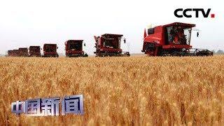 [中国新闻] 国家粮食和物资储备局:粮食年工业总产值突破3万亿元 | CCTV中文国际
