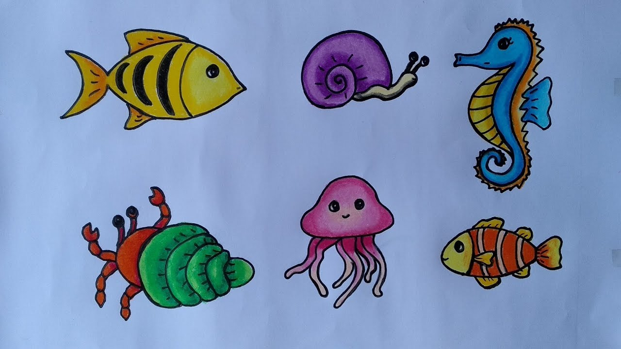 Cara Menggambar Macam Macam Hewan Laut Menggambar Dan Mewarnai Hewan Laut