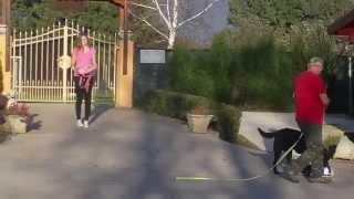 Sniffer Dog Training Willi