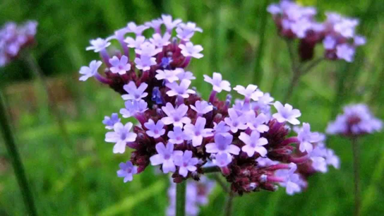 Beautiful Wild Flowers Youtube